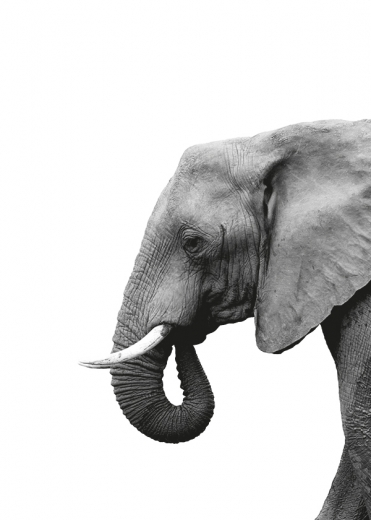 ELEPHANT FROM SIDE