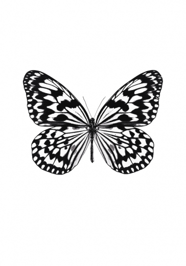 BUTTERFLY BLACK & WHITE