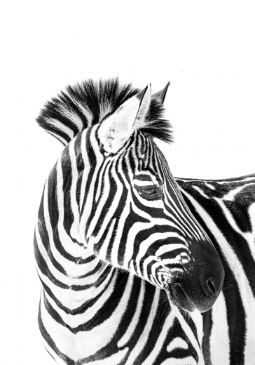ZEBRA BEAUTY