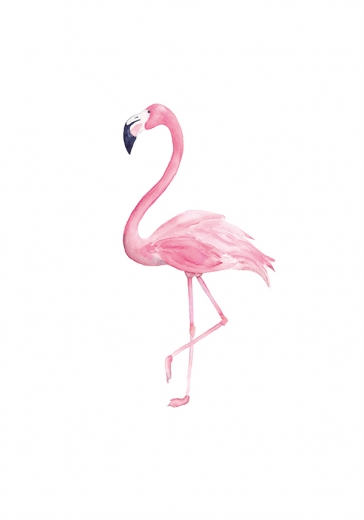 SWEET FLAMINGO