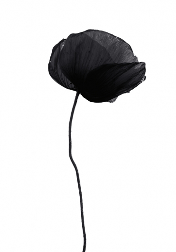 BLACK POPPY FLOWER