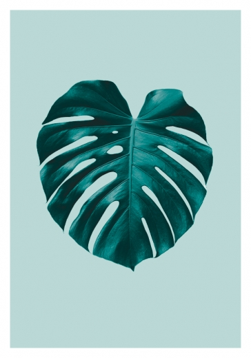 MONSTERA MINT