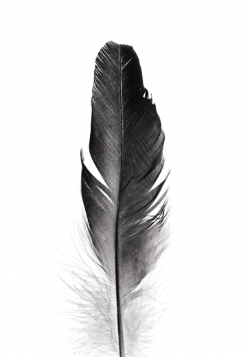 BIG BLACK FEATHER