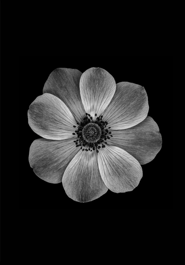 B&W COSMO FLOWER