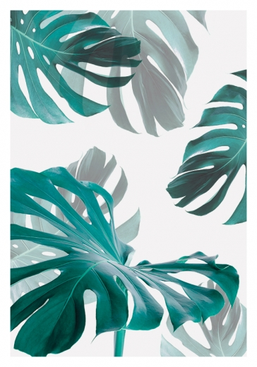 MONSTERA NO2
