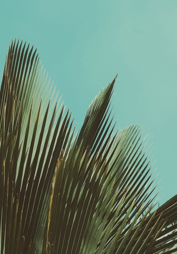 PALMS ON BLUE