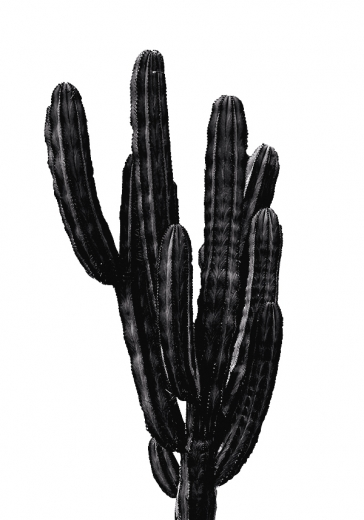 BLACK CACTUS THREE