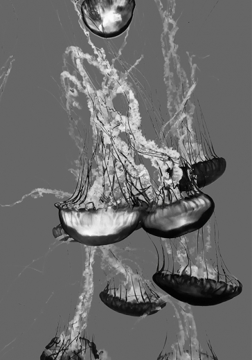GREY JELLYFISH ART