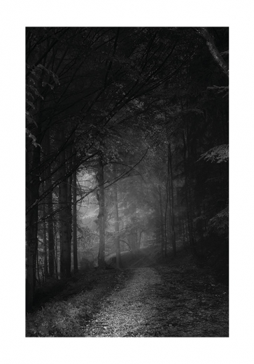 BLACK & WHITE FOREST