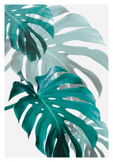 MONSTERA ART NO1